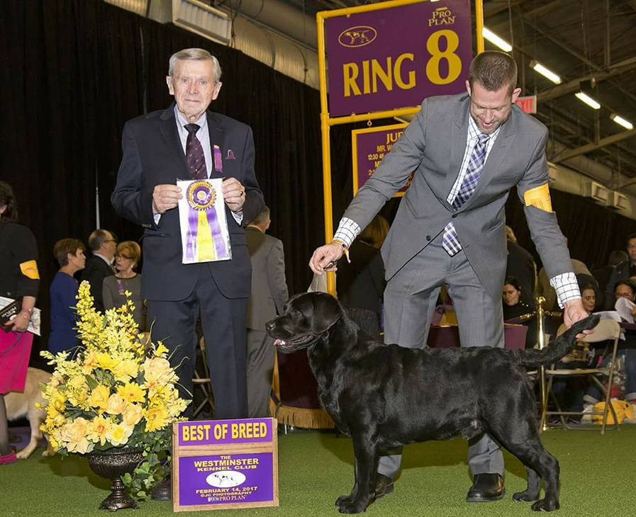 Ricky Winning Best of Breed at Westminster 2017