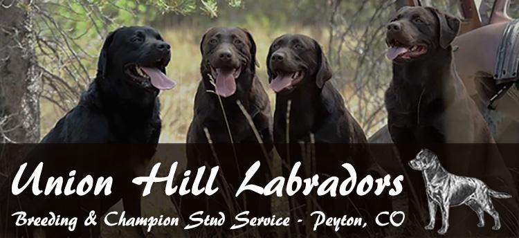 Union Hill Labradors