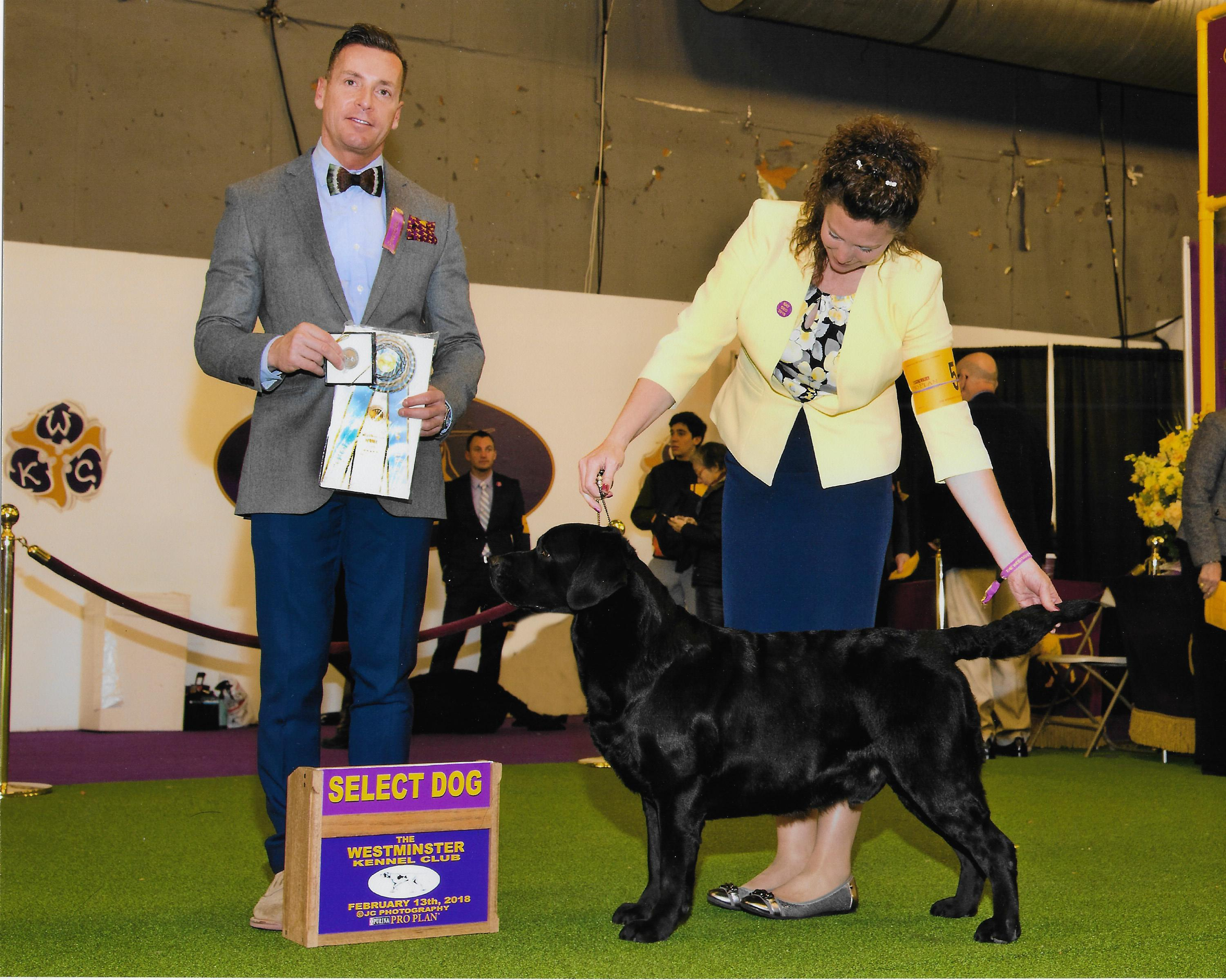 Ricky, Select Dog, Westminster Kennel Club 2018